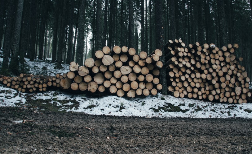 چوب روسی یولکا