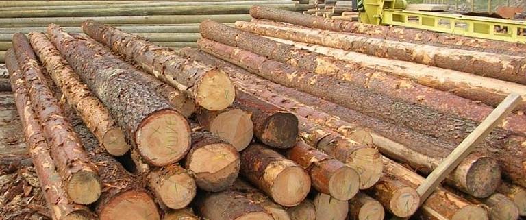 عمده ترین چوب های تولیدی در روسیه