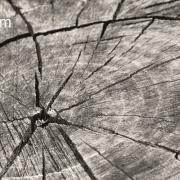 قیمت چوب روسی انزلی